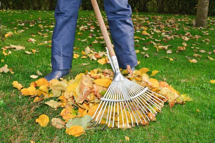 Очистка овсяницы от листвы осенью