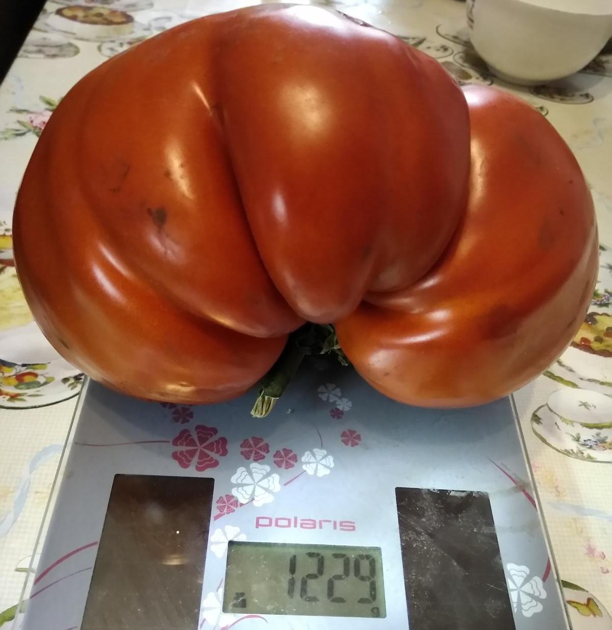 Малиновый богатырь томат